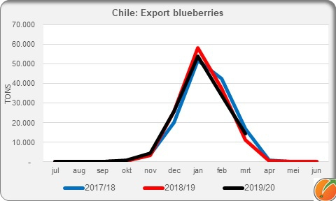 Export blueberries Chile