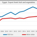 Egypt export fresh fruit and vegetables